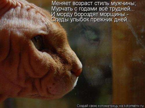 rolcats, via deletia