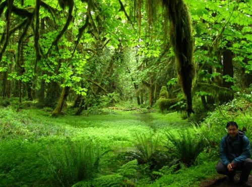 mossiest rainforest in existence