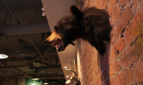antlers bear taxidermy