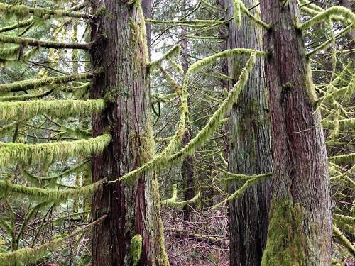 rainforest pacific northwest