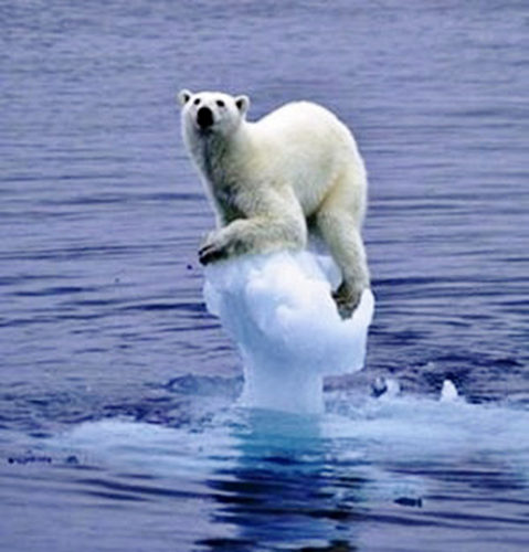 melting ice, polar bear